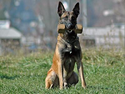 Резултат с изображение за обучение на куче